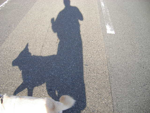 shadow-dog.jpg