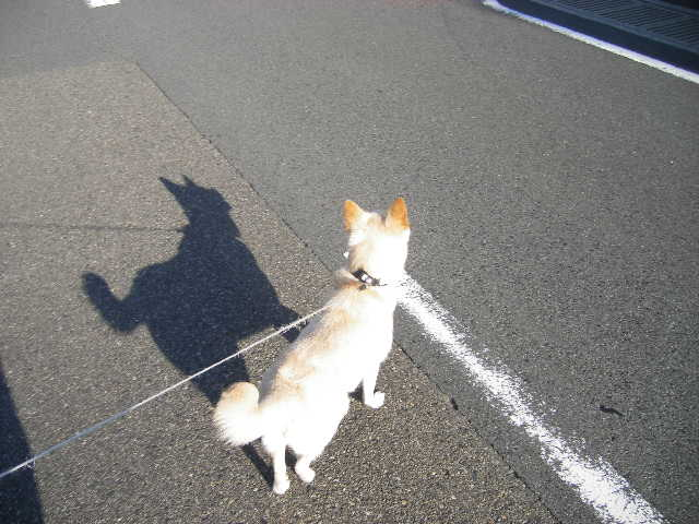 shadow-real-dog.jpg